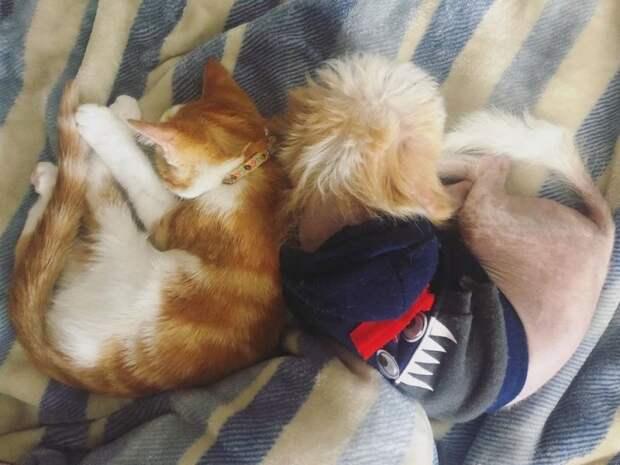 Женщина не хотела оставлять уличного котенка, но у ее пса были другие планы
