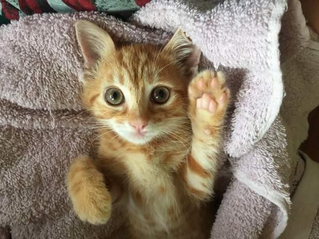 Матвей - Спасение под колёсами Радость, котенок, помощь, приют, спасение