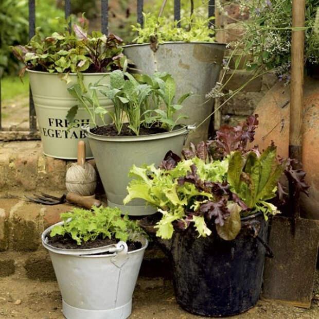 herb-garden-inspirations32-500x500 (500x500, 289Kb)