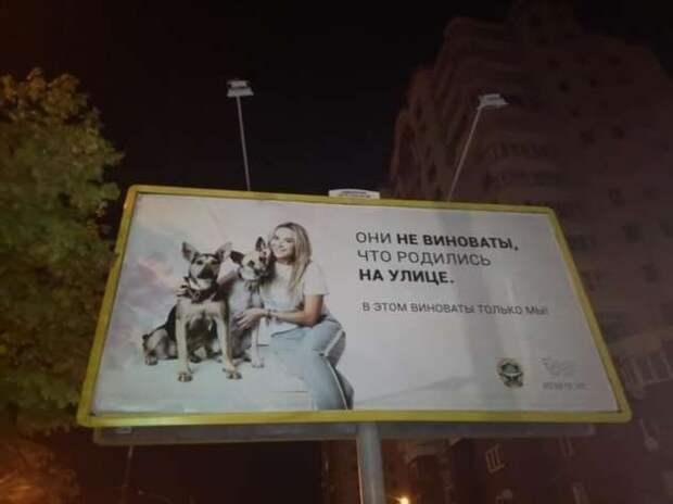 Беларусь до 9 августа: пост о глупых новостях, самоиронии и картохе (19 фото)