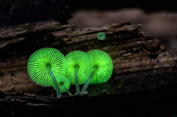 Удивительные уголки природы, которые светятся ночью