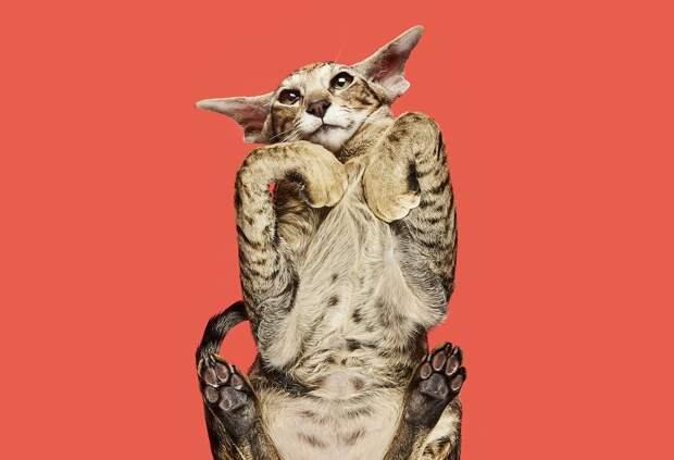 10 прекрасных фото котиков на стекле