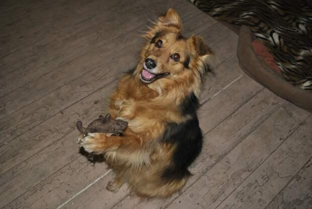 Собаку вырвали из рук живодёров, после чего она попала в приют. А там её обижали другие питомцы…