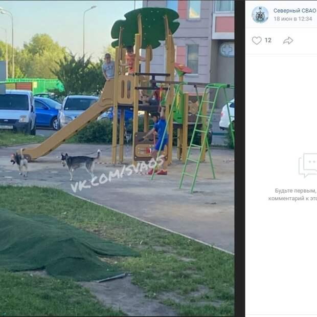 Девочка с двумя собаками во дворе в Северном обеспокоила соседей по району