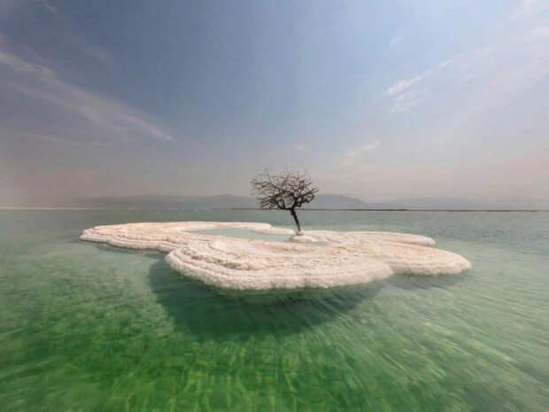 """""""Древо жизни"""", растущее на соляном острове посреди Мёртвого моря (6 фото + видео)"""