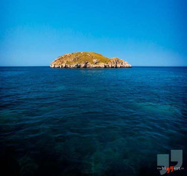 Острова с уникальными животными. CC0
