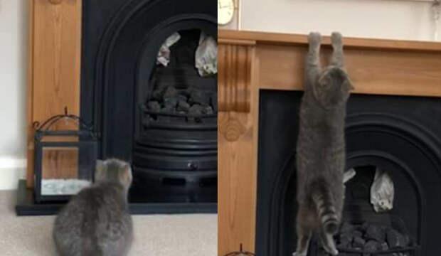 Упитанный котик попробовал запрыгнуть на каминную полку и познал фиаско