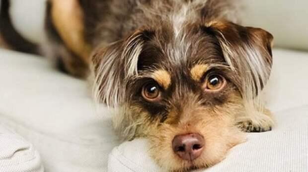 Когда-то эту собачку нашли на улице, а сегодня она не устаёт радоваться жизни