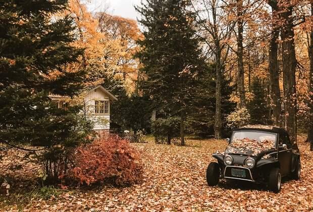 Насколько вам нравится осень на самом деле?