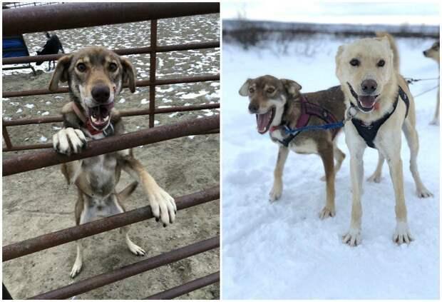 3. Дженга (Jenga) - 8 лет животные, истории, мило, работа, собака, собаки, упряжка, фото