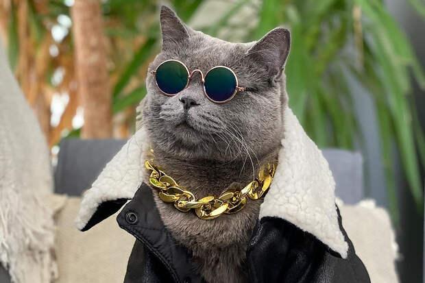 Знаменитый в Instagram кот умер от сердечного приступа