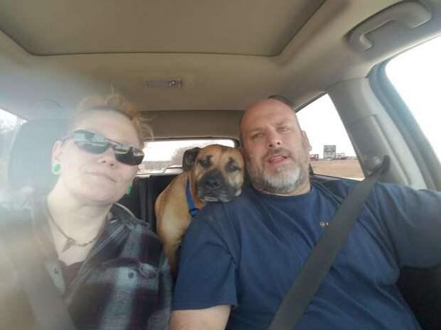 Мужчина не закрыл машину, и ехал назад уже с неожиданно появившимся бездомным псом