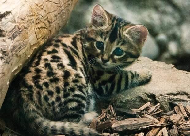 6 фото самой смертоносной кошки в мире