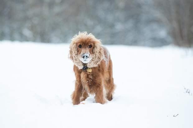 В Ижевске официально запретили выгуливать собак на детских площадках