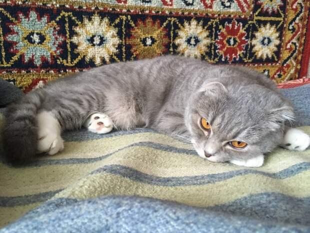 Про котов (отборные улыбки) #8