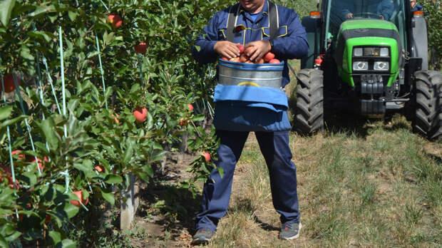 Фермер вРостовской области незаконно получил субсидию на32млн рублей