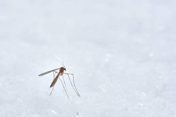 Погода в Украине может привести к вспышкам эпидемии малярии. Страну оккупировали комары