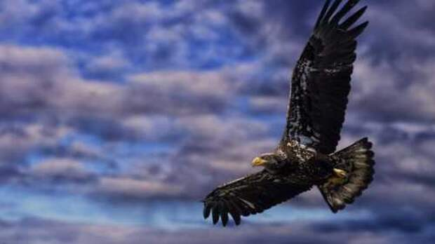 Румынский орёл кружит над Украиной