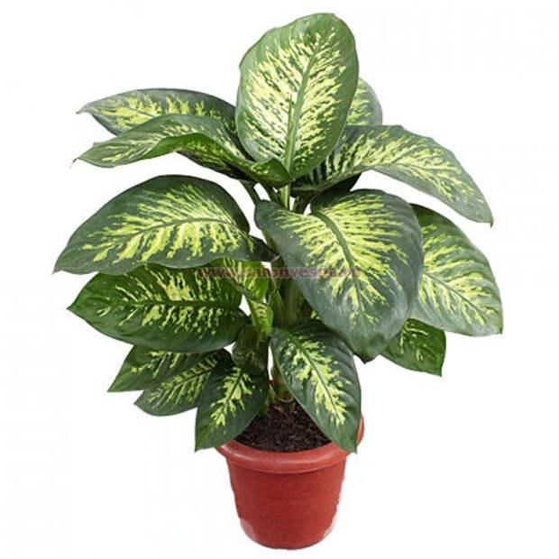 Домашние растения, причиняющие вред здоровью