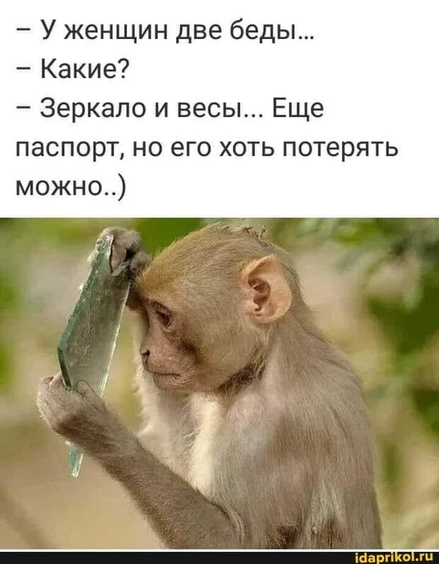 -Товарищ Кутькин, на вас поступила жалоба от соседей. -И на что они жалуются?...