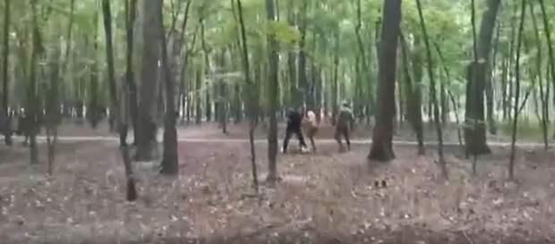 В соцсети разыскивают хулиганов из Щукинского лесопарка