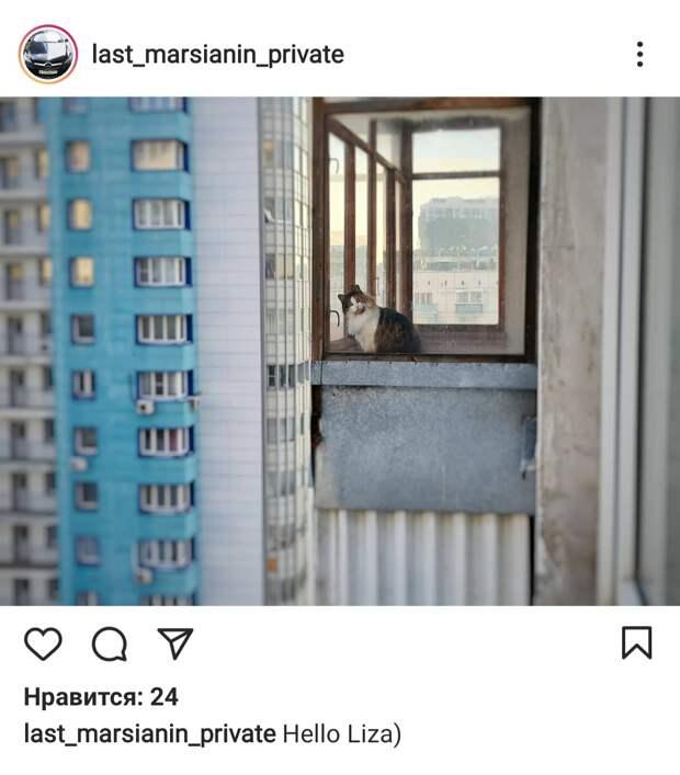 Фото дня: кот из дома на Октябрьской подглядывал за соседями