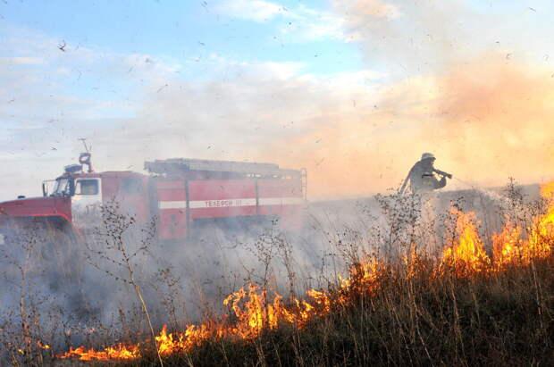 За прошедшую неделю рязанские пожарные 417 раз тушили возгорания сухой травы