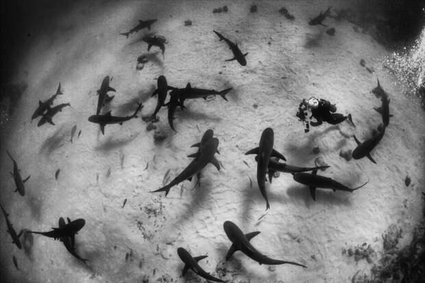О плавании со слонами и акулами