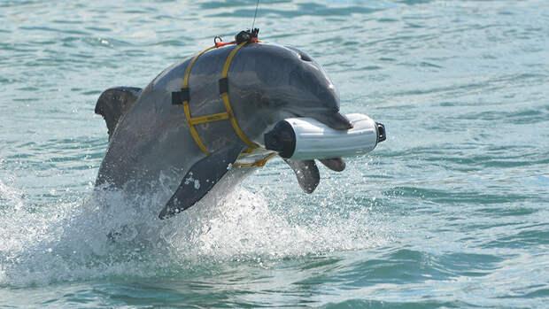 До слез! Умерли, но не сдались. В Крыму погибли украинские боевые дельфины