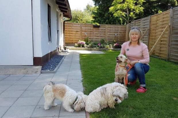 Спасенный омскими волонтерами пес полностью преобразился и нашел дом в Германии