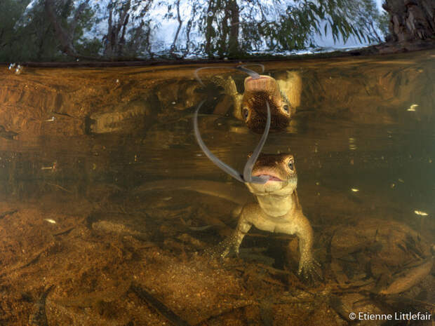 Самые зрелищные чудеса природы Австралии на снимках фаворитов конкурса «Фотограф года»