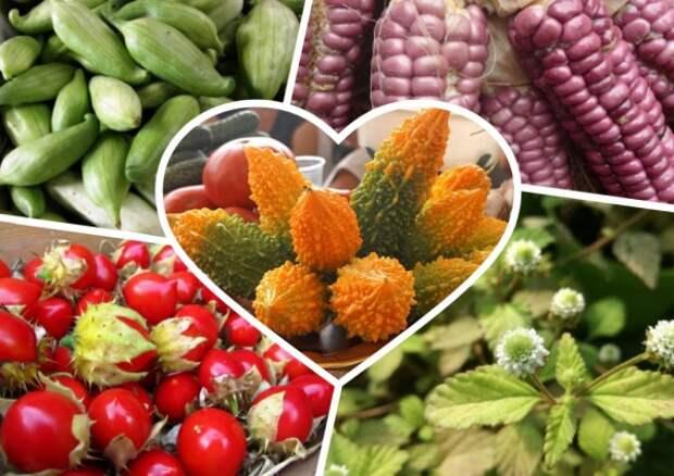 По каким же критериям выбирать сорта семян?