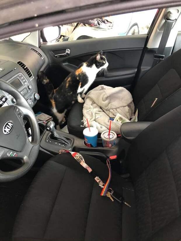 У девушки не было кота, но однажды она услышала из гаража мяуканье…