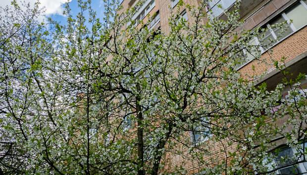 Температура в Московском регионе 2 мая будет ниже климатической нормы