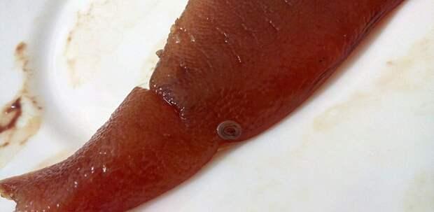 Будьте осторожны, покупая рыбу!