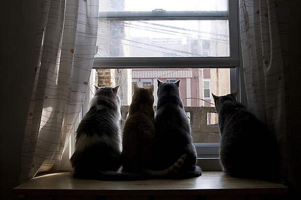 Всегда вместе. Фото