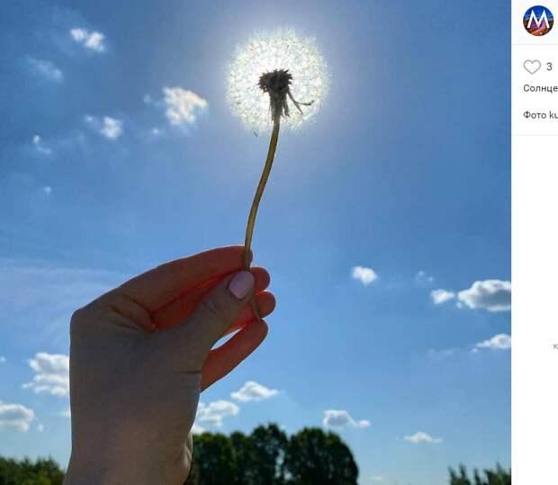 Фото дня: солнечный одуванчик