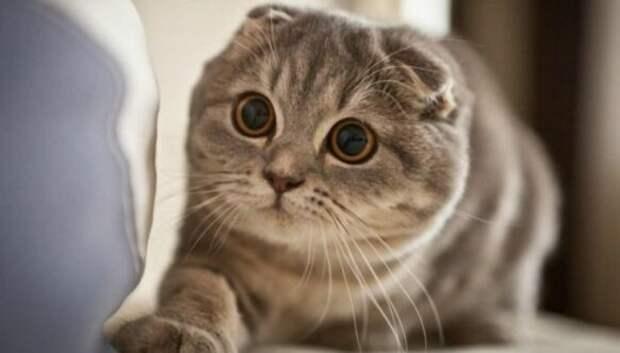 Взгляд в пустоту: видят ли кошки что-то потустороннее, недоступное нашему глазу