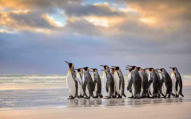 20 чудесных фактов о пингвинах