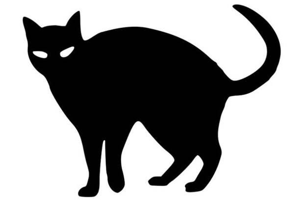 Встретить черную кошку