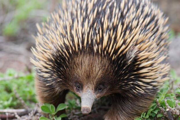 Самые редкие животные Австралии - Редкие животные мира
