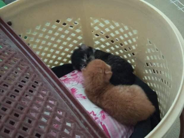 Кошка попала в лапы к собакам, а ее котята осиротели. Малышам нужна была помощь