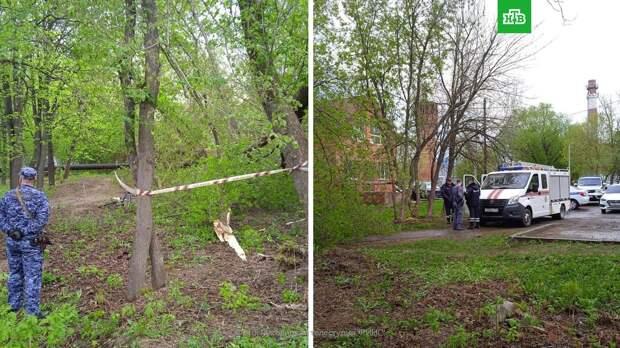 В Подмосковье женщину убило упавшим деревом