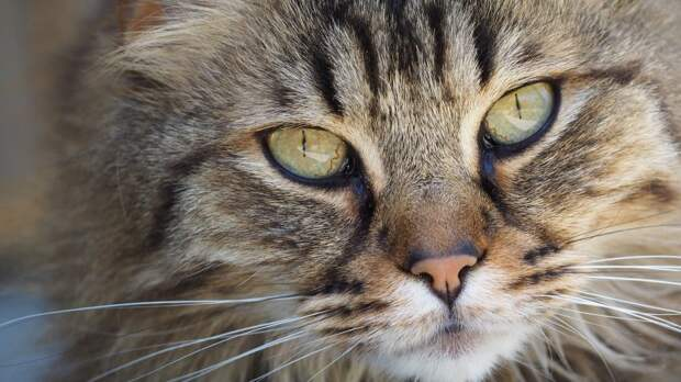 Для установки домика для животных жителям Бегового потребуется протокол — «Жилищник»