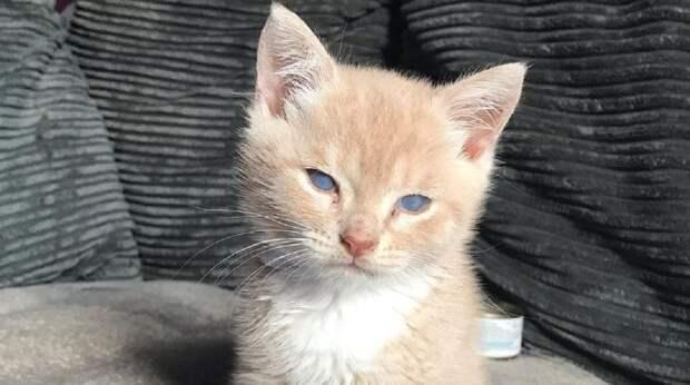 Котёнок с редким заболеванием бродил в одиночестве по парку. Его судьба казалась неопределённой