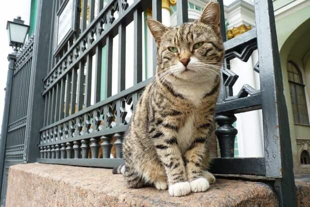 Каждый эрмитажный кот приносит и сегодня немалую пользу