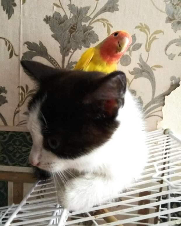 Кажется, коты очень удивлены их дружбе с попугаем дружба, животные, коты, кролик, попугай, собака, черепаха