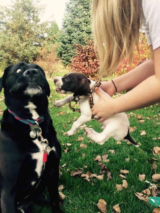 Жизнь этих 10 собак была идеальной, пока в семью не принесли щенка