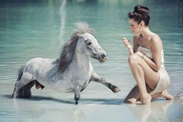 Сила и грация: великолепные лошади на фотографиях Конрада Бонка