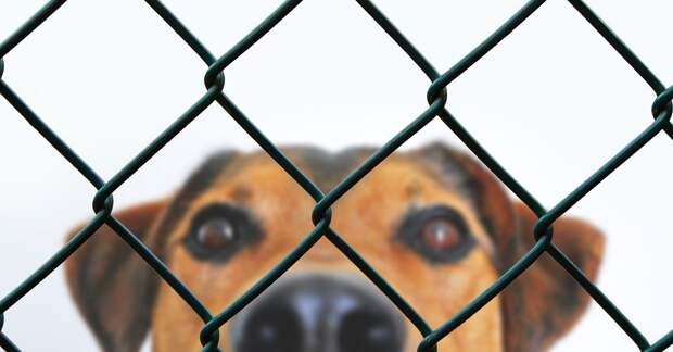 Взрыв газового оборудования в Кемерово привел к гибели животных в частном приюте